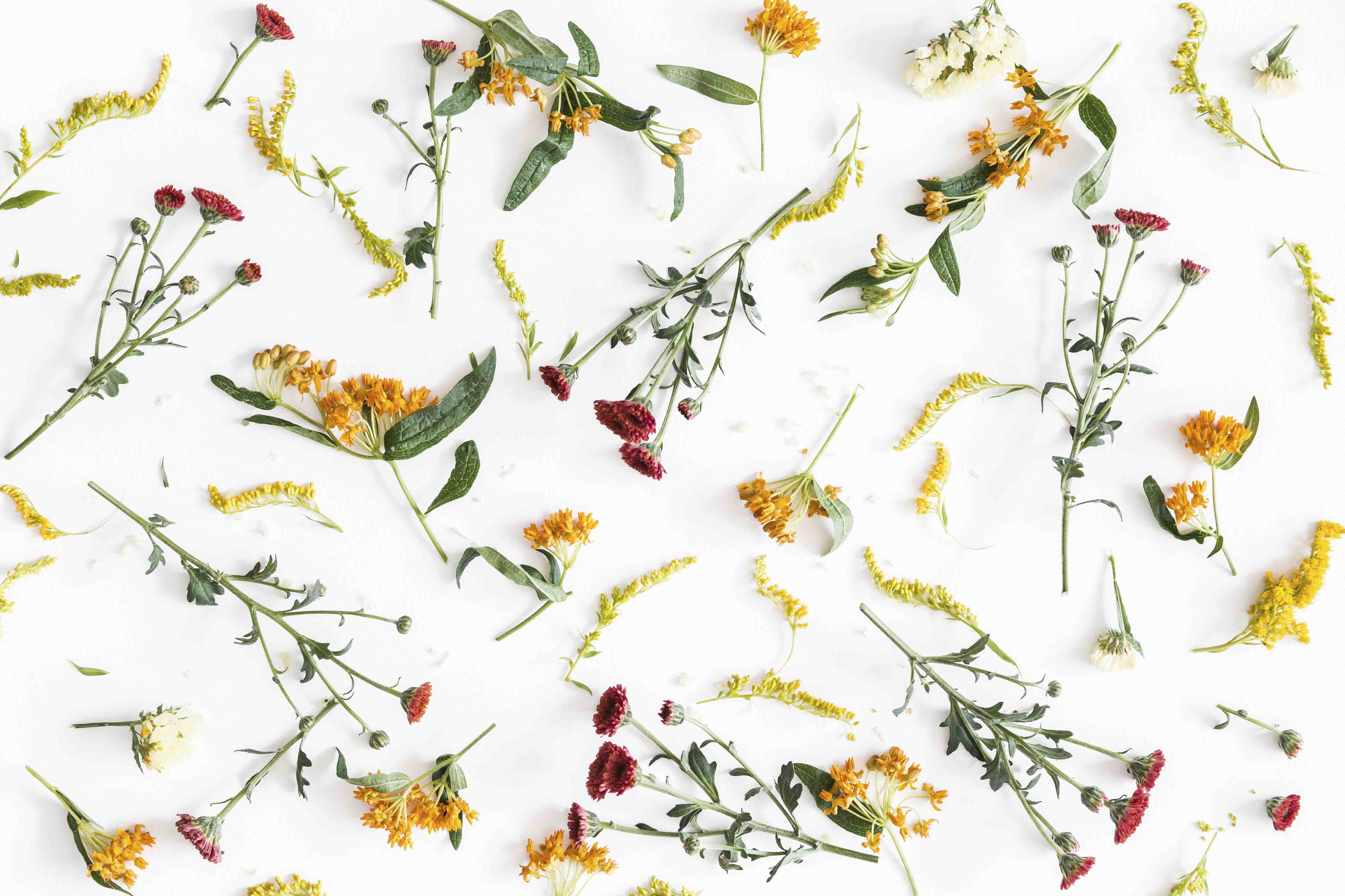 Autumn floral composition. Pattern made of fresh flowers on white background. Autumn, fall concept. Flat lay, top view