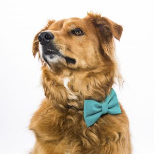Teal Dog Bow