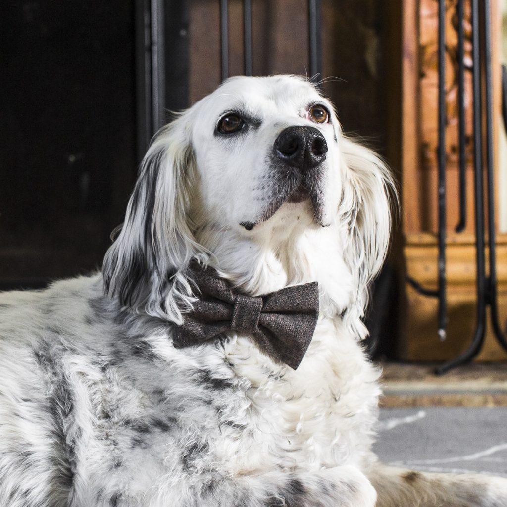 Espresso Linen Dog Bow