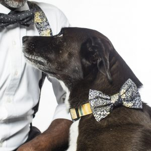 A dog showcasing our black flowers dog bow.